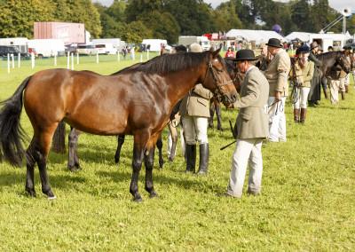RS2015_Horses-2