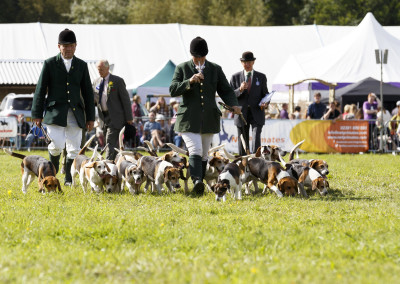 RS2015_Parade of Hounds-2
