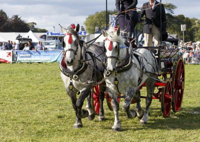 RS2015_Heavy Horses-11