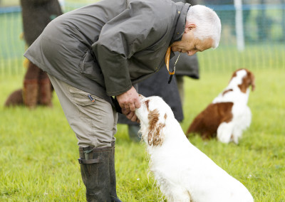 RS2015_Minor Breed Spaniels C_Ring-8