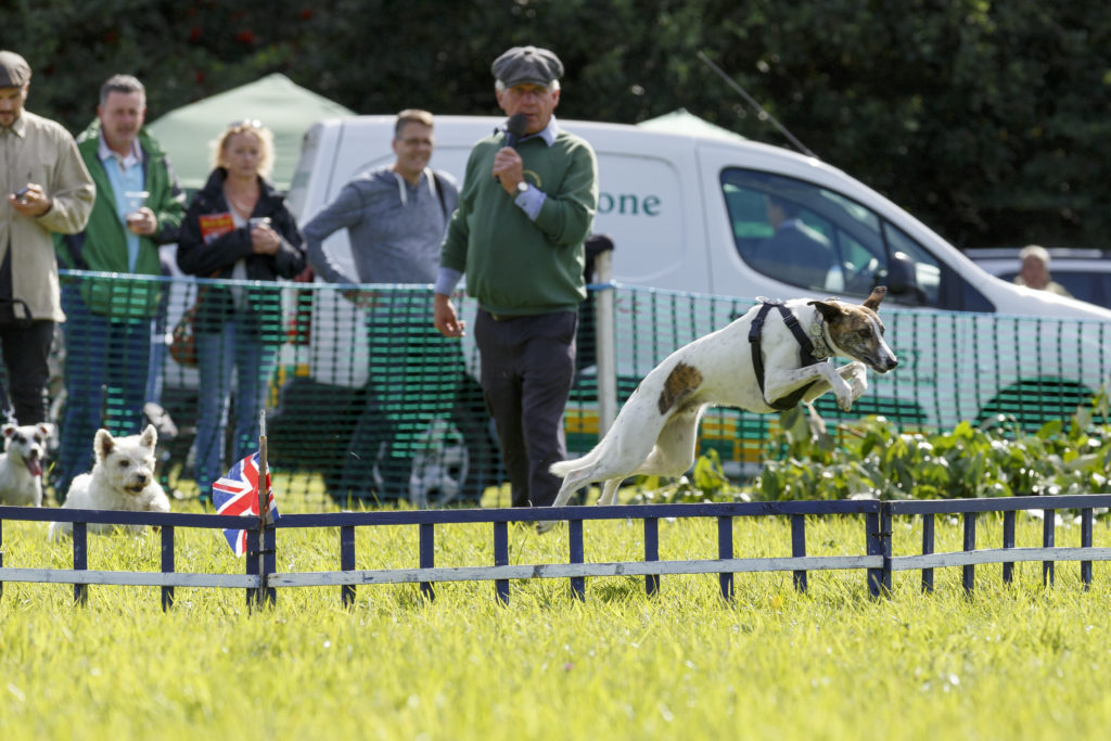 Dogs jumping & commentator
